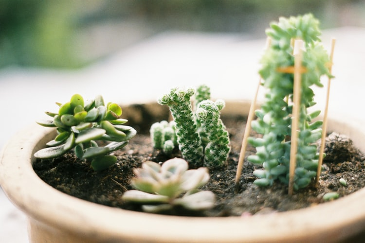 Vaso de plantas sendo usado com a função de berçário para pequenos brotos.