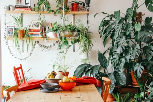Várias plantas dentro de uma sala de jantar, estilo Urban Jungle.