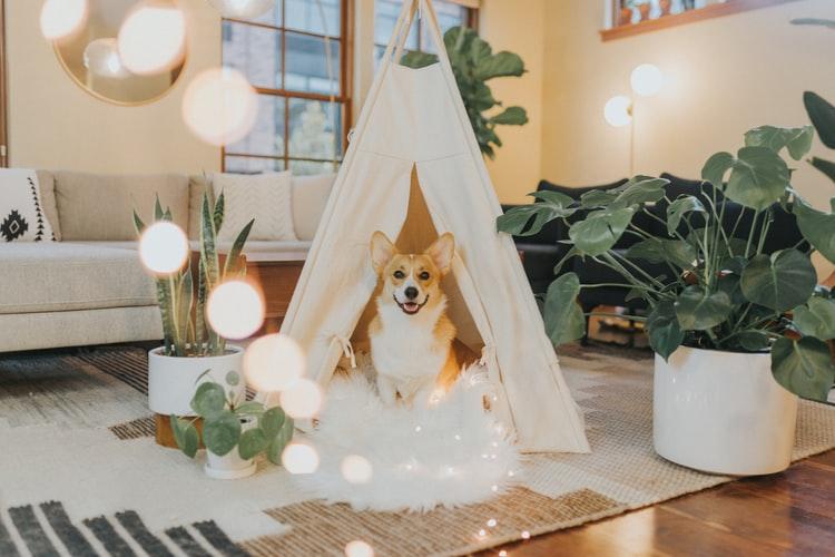 Cachorro em ambiente criado com plantas e tapetes aconchegantes.