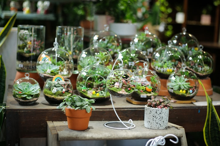 Vasos de plantas, estilo terrários.