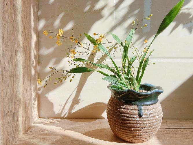Vaso de planta com espécie de orquídea ao Sol.