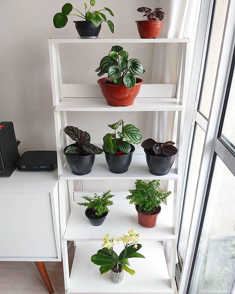 Diversos vasos de plantas em uma estante escada Madesa