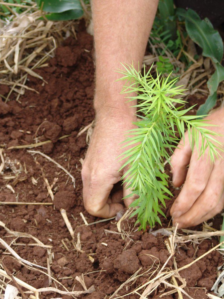 Mão plantando muda de planta na terra como exemplo da Madesa conquistando selo carbono zero.