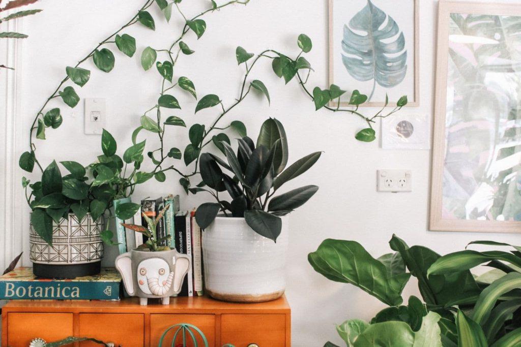 Móvel rústico decorado com diversas plantas como exemplo de decoração de apartamento alugado.